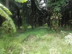 Tapah, Perak