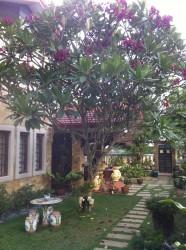 Lagenda 2, Bukit Jelutong