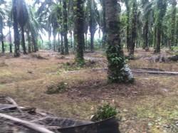Taiping, Perak