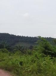 Sungai Petani, Kedah