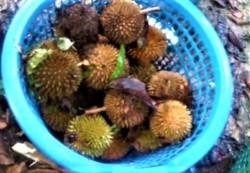Raub, Pahang
