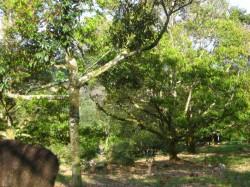 Taman Bukit Koman, Raub