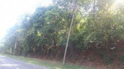 Taman Bunga Raya, Mantin