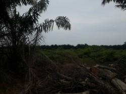Tanjung Sepat, Banting