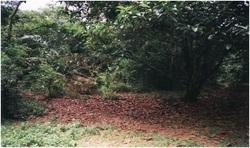 Nilai, Negeri Sembilan