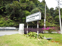 Desa Anthurium, Cameron Highlands