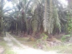 Ayer Tawar New Village , Ayer Tawar